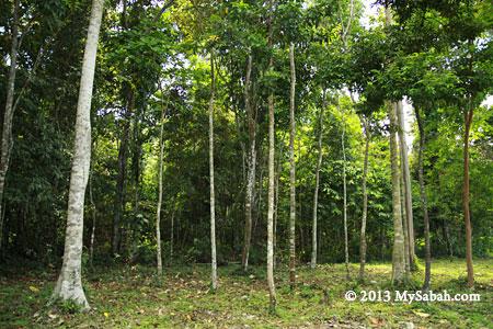 beach forest of Tumunong Hallu