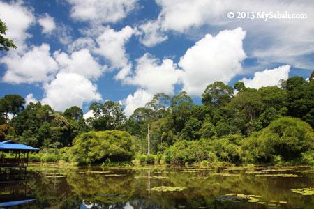 Pandan Lake in Taliwas Park