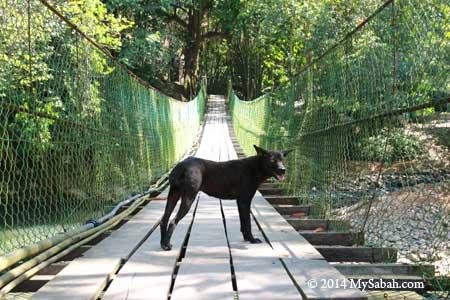 dog on hanging bridge