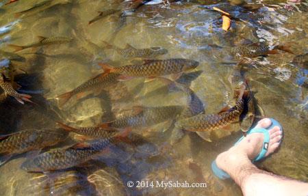 big fishes swim around my feet
