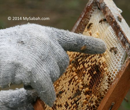 moveable honeycomb frame