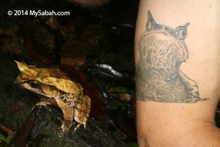 Horned frog tattoo