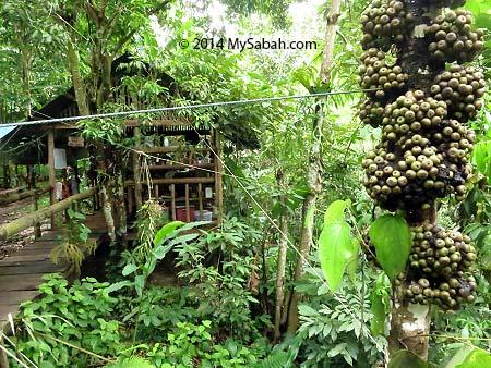 kitchen of Lupa Masa Camp