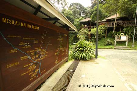 Mesilau Nature Resort