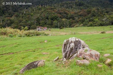 pasture of Desa