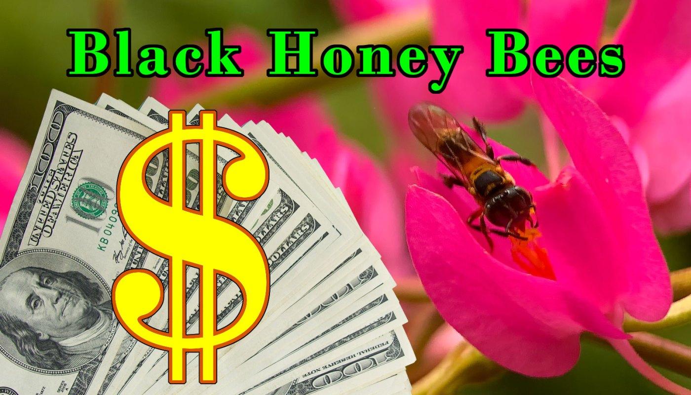 Kelulut beekeeping