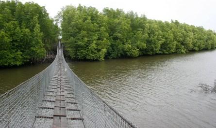 hanging bridge in mangrove