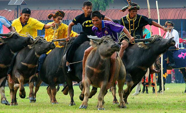Tamu Besar Festival