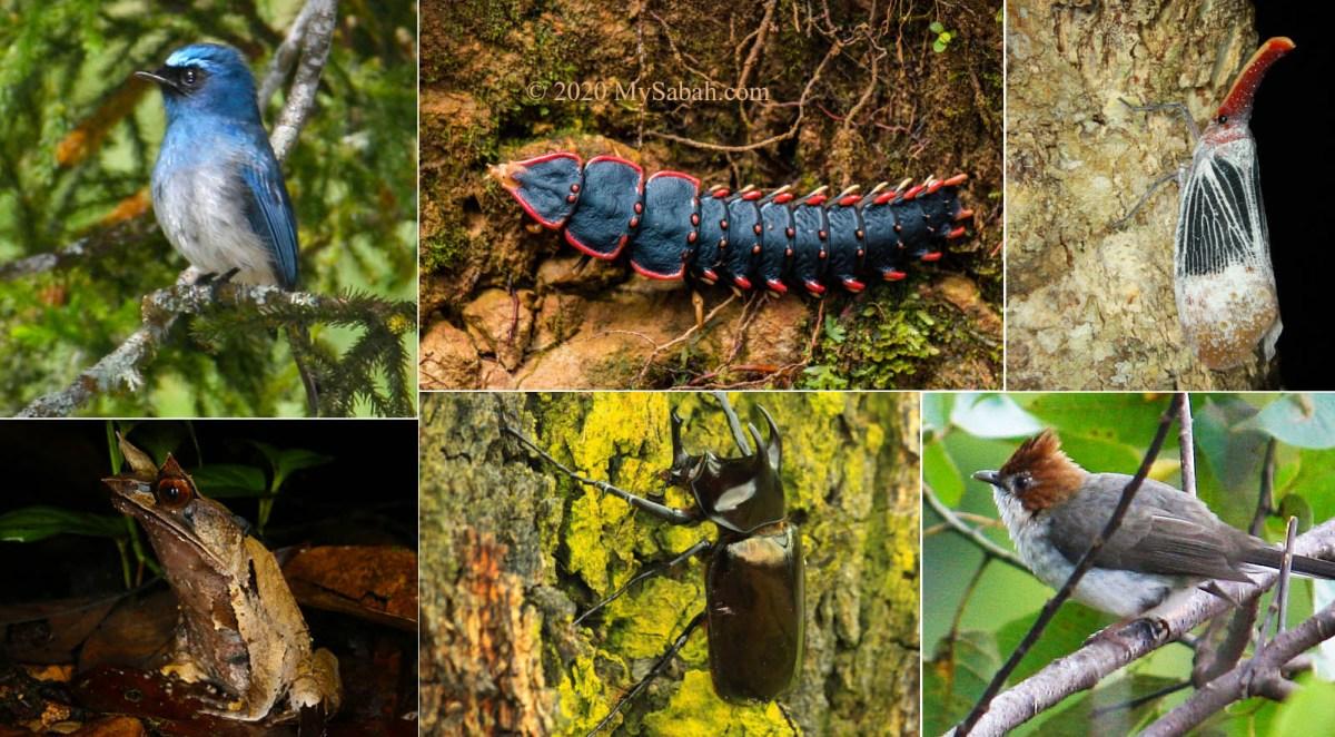 Wildlife of Kinabalu Park