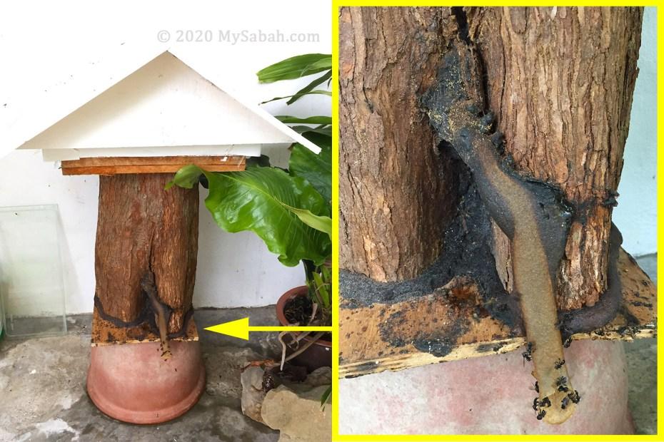 Gelodok bee house for Kelulut (stingless bees)