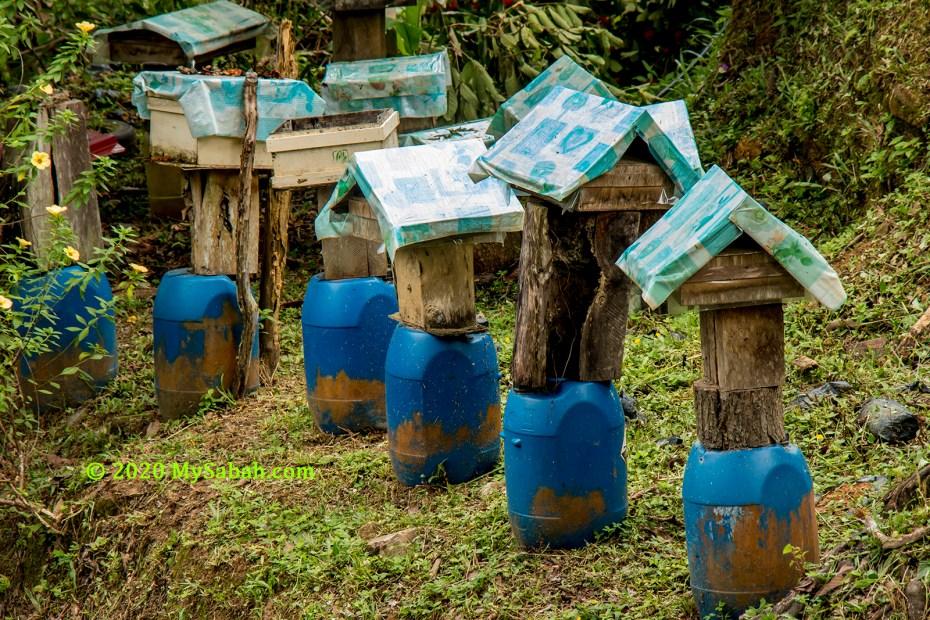Row of kelulut bee houses
