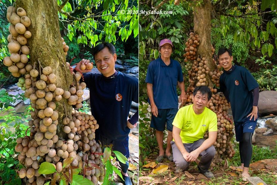 Photos next to Liposu fruit tree
