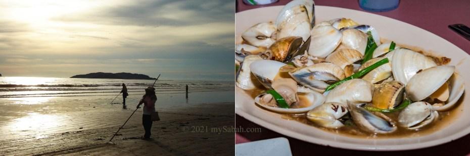 Locals harvest the Meretrix / Sapak clams in the sand of Tanjung Aru Beach