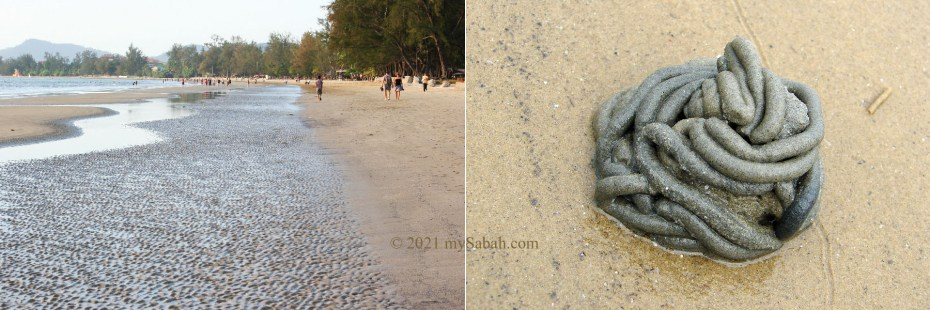Left: Tanjung Aru Second Beach during low tide. Right: Excreted deposit from a sand worm (lugworm)