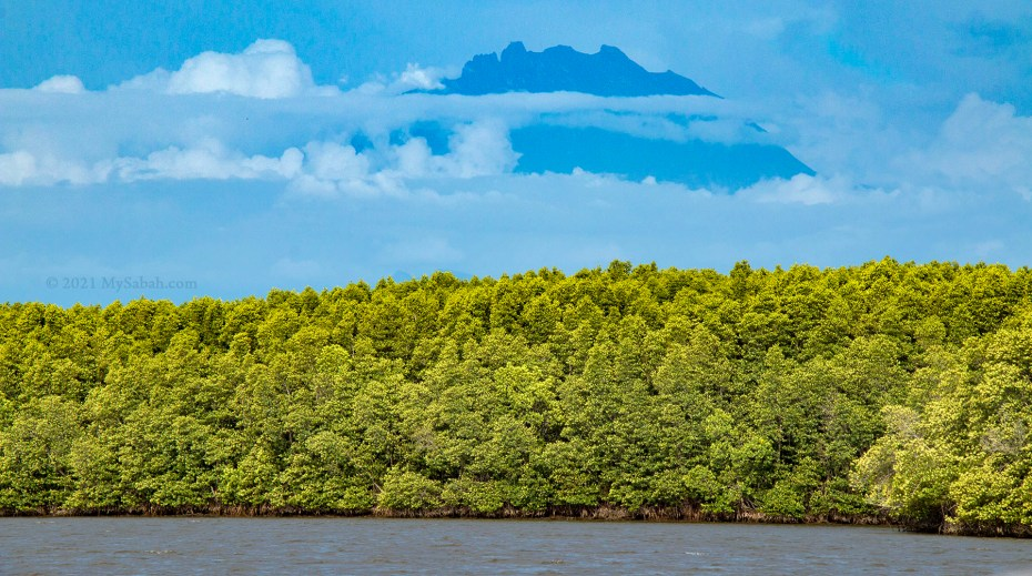 Mount Kinabalu and the mangrove forest of Mengkabong
