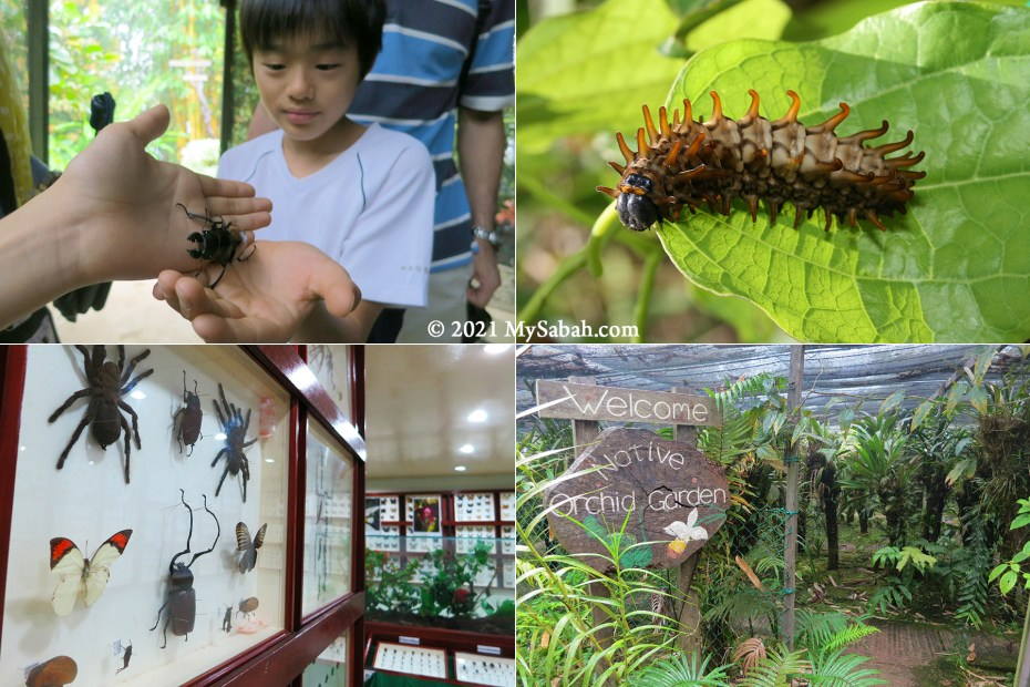 Education tour, butterfly nursery, exhibition hall and native orchid garden of Kipandi Butterfly Garden
