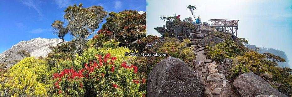 Left: sub-alpine vegetation on Mount Kinabalu. Right: Aki View Platform