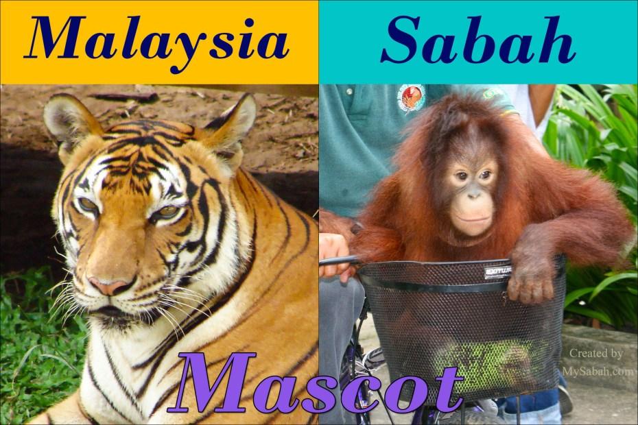 Tiger vs Orangutan