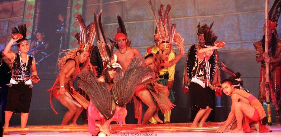 Dancer mimic hornbill in Magunatip