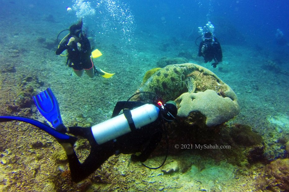 Scuba diving and turtle