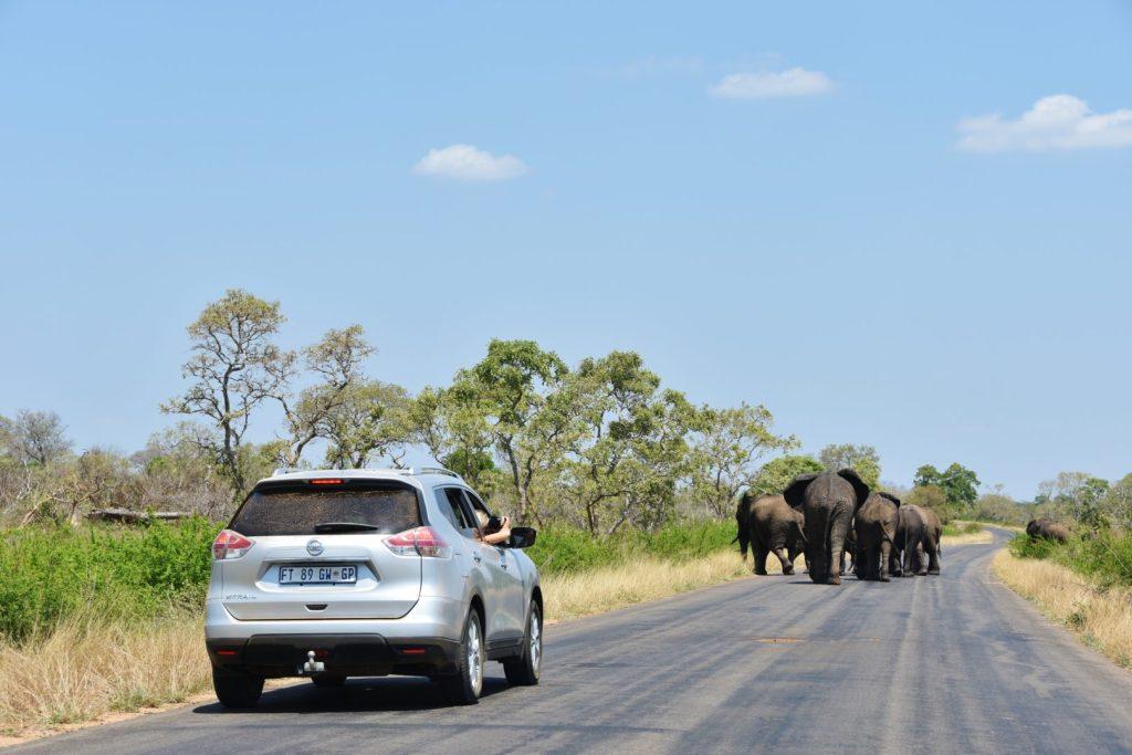 Avvistamento elefanti nel Kruger