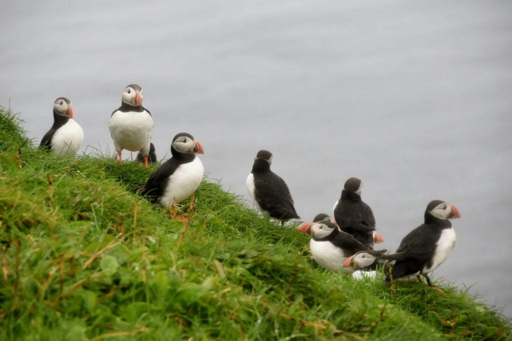 Mykines Isole Faroe