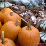A crowd of pumpkins and their friends at the Farmer's market