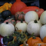 Fall vegetables at the Farmer's Market