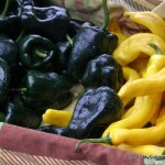 Peppers and Squash cavort at the Farmer's Market
