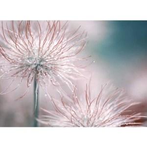 Pasqueflower Blossom Canvas art