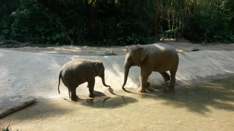 Elephants of Chimelong Safari Park
