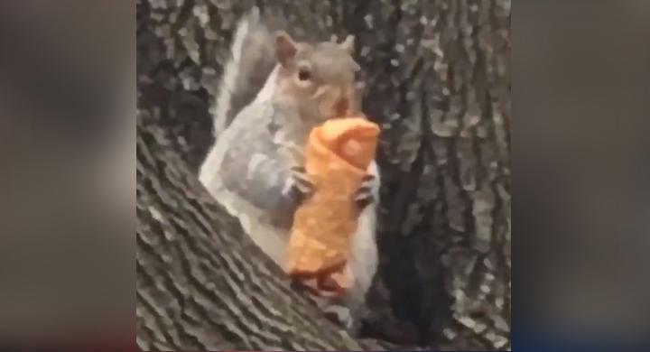 squirrel_1546547535503.JPG