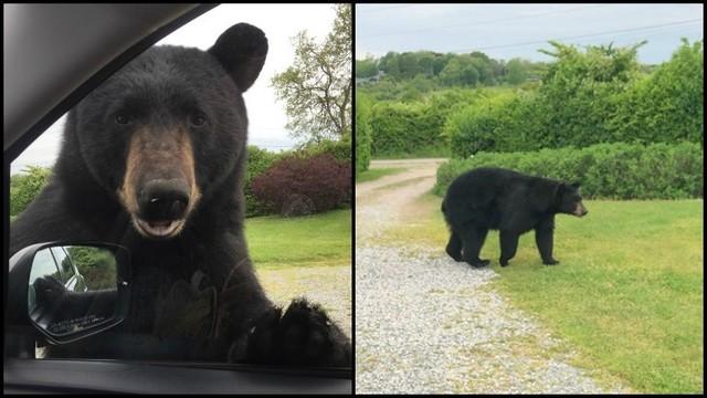 Narragansett bear sighting_1559069660655.jpg_89544464_ver1.0_640_360_1559079421073.jpg.jpg