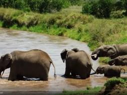 Ελεφαντάκι παρασύρεται από το νερό