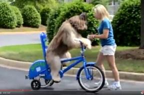 Σκύλος μαθαίνει… ποδήλατο