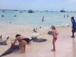 Διάσωση δελφινιών στα Μπαρμπάντος