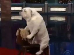 Ο σκύλος κάνει… ιππασία