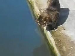 Γάτα ψαρεύει