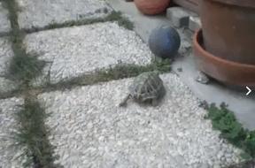 Η χελώνα και ο …σκύλος
