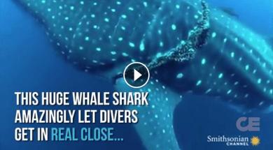 Διάσωση φάλαινας