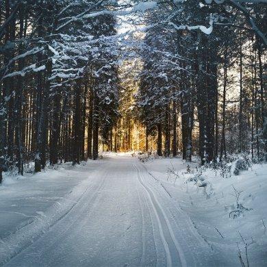 Best Scandinavian Crime Fictions In 2017 Petrona Award Shortlist
