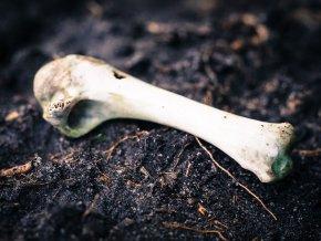 The Bone Yard jefferson bass thriller forensic thriller crime fiction