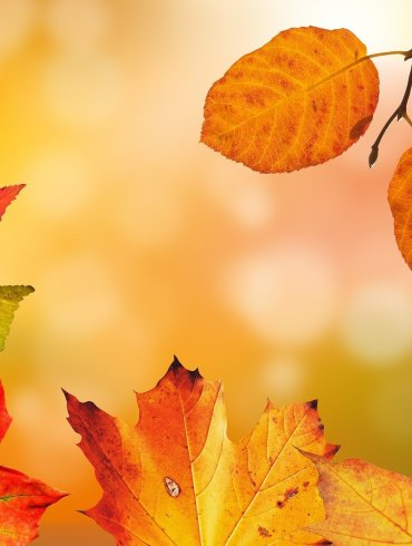 Autumn Leaves Horror Flash Fiction By Paul Kindlon