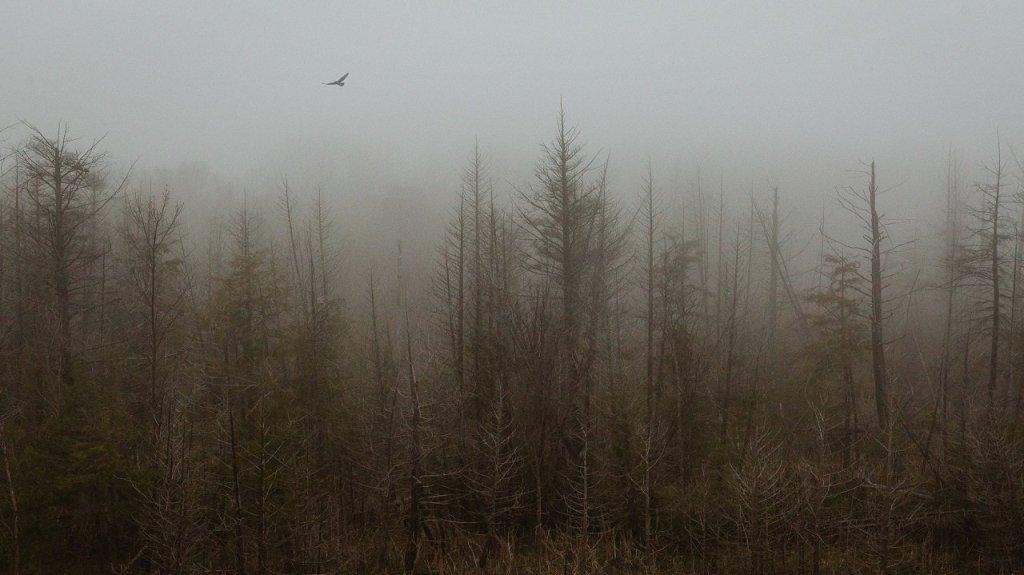 Michael McCluskey Photography Mystery Tribune 1
