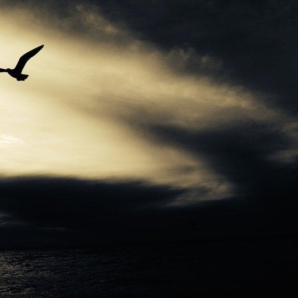 Gunslinging Bird Noir Flash Fiction By Mike Aaron