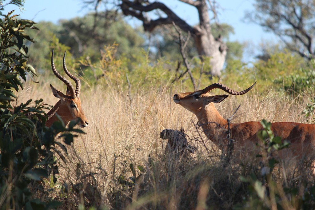 A game of thrones in the Kruger National Park.