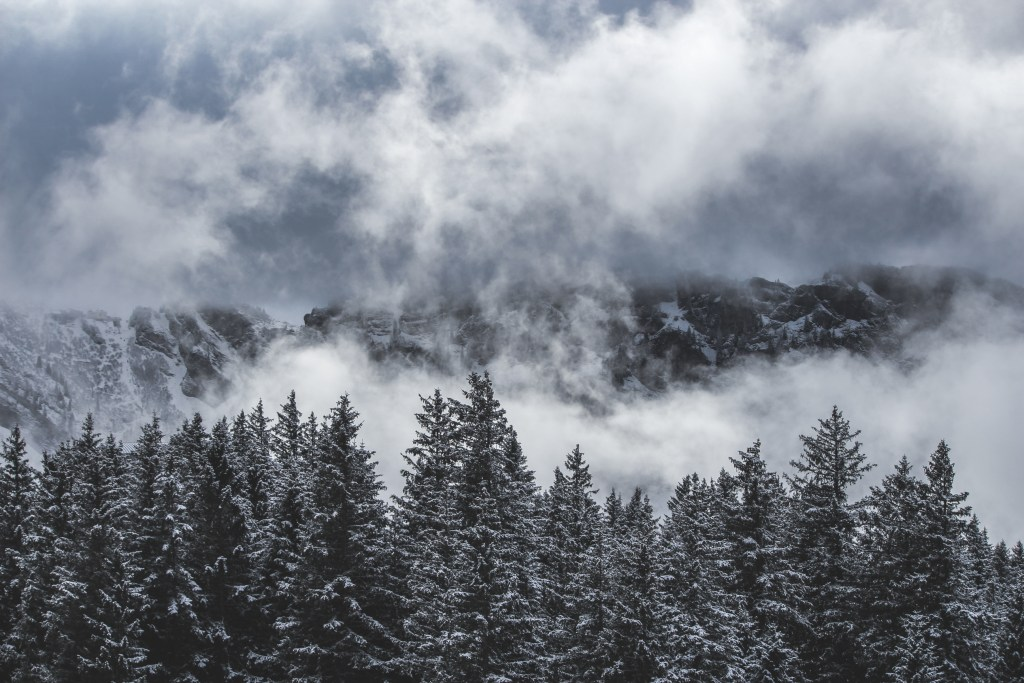 Image of the snowy forest and mountains.