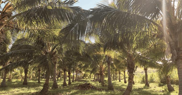 Love of the Land: Coconut Farm Treasure at Punakea Palms