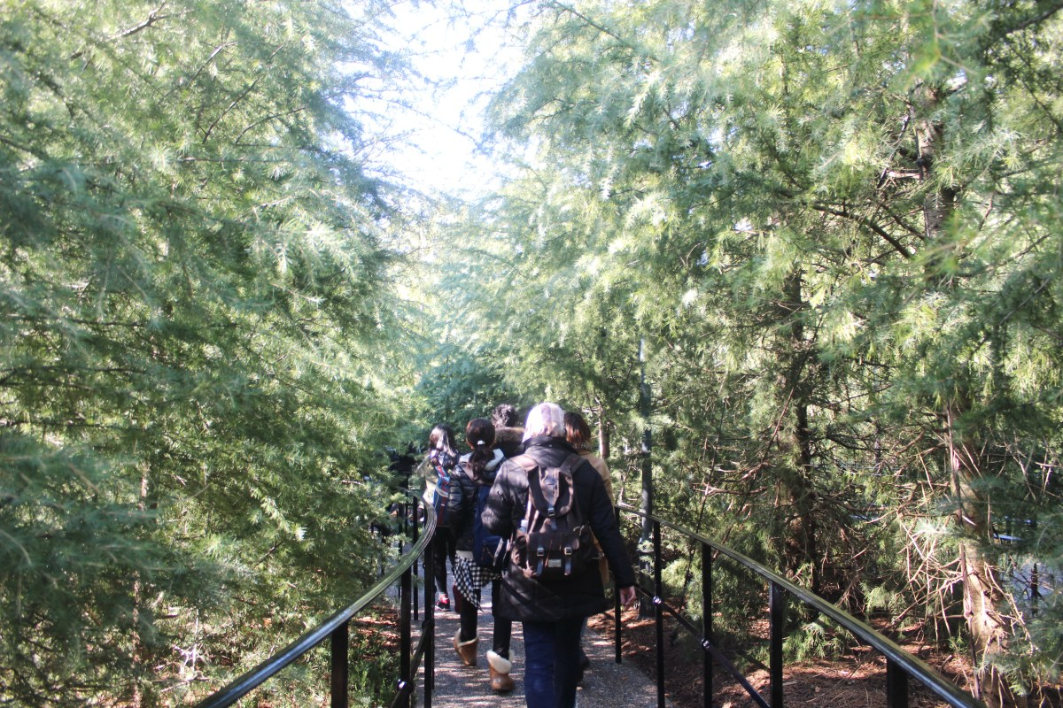 Dress up diary forest - There Are Two Ride That You Can Enjoy First Is The Forbidden Journey It S 4d Ride Where We Will Sit On A Chair And Lift Up And Down Turn Around With Your