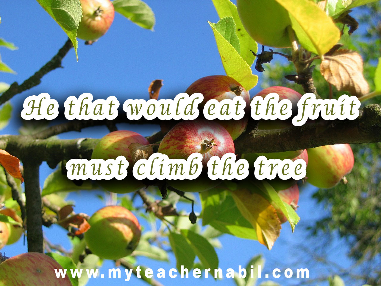 He that would eat the fruit must climb the tree